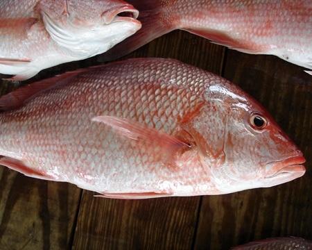 Pesce: Fundamentals of Seafood by Enoteca Sileno
