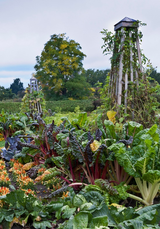 Kitchen gardens for schools and the community with carol for Gardening classes near me