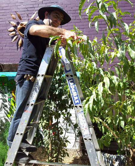 Summer Fruit Tree Maintenance