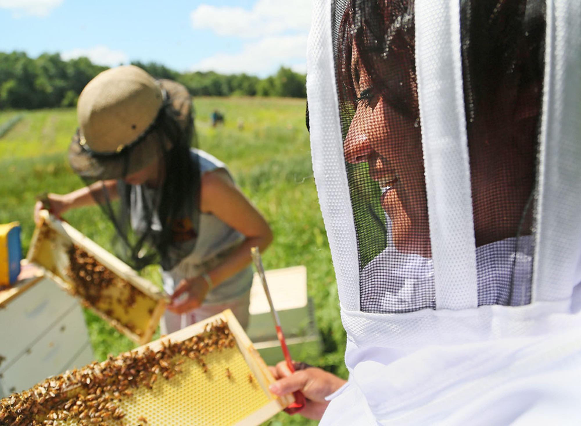 Beekeeping Workshop at Bee Sustainable (Photo Credit to Star Tribune)